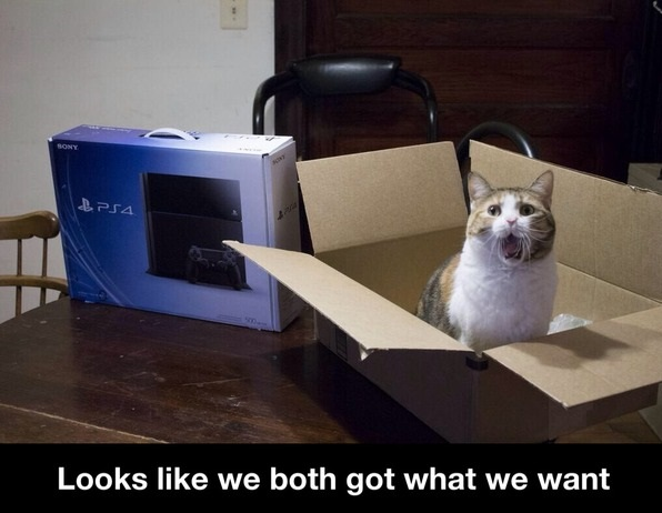 funny-picture-cat-ps4-box