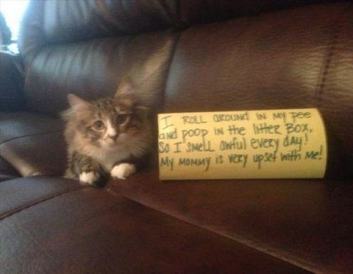 funny-picture-cat-shaming-pee