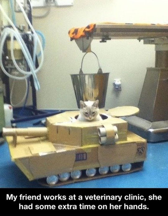 funny-picture-cat-tank-veterinarian-homemade