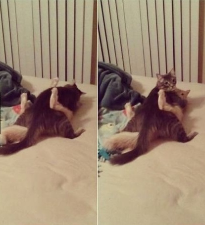 funny-picture-cats-busted