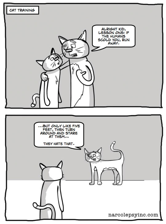 funny-picture-comic-cat-training-kitty