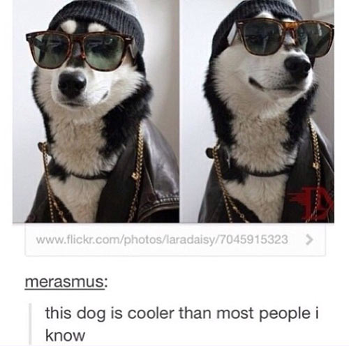funny-picture-cool-dog-glasses-people