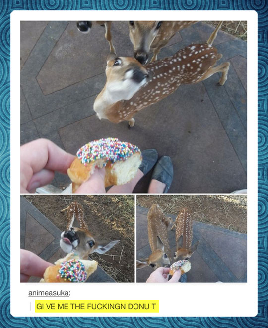 funny-picture-deer-donut-zoo-hand