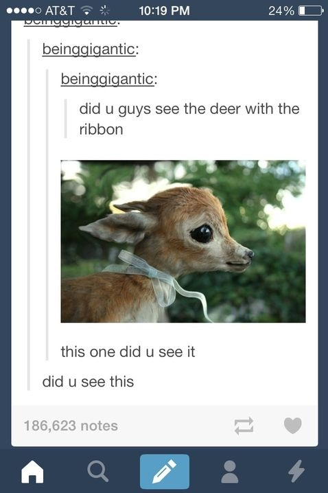 funny-picture-deer-ribbon-cute