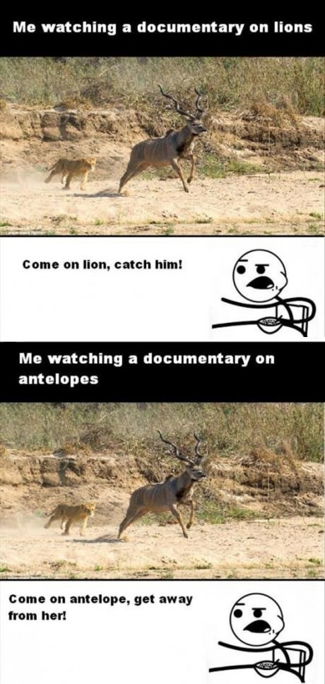 funny picture documentary animals  ics cereal guy