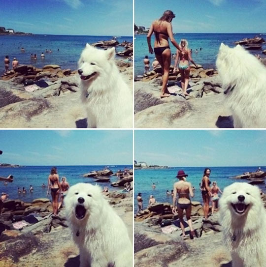 funny-picture-dog-beach-girls-swimming