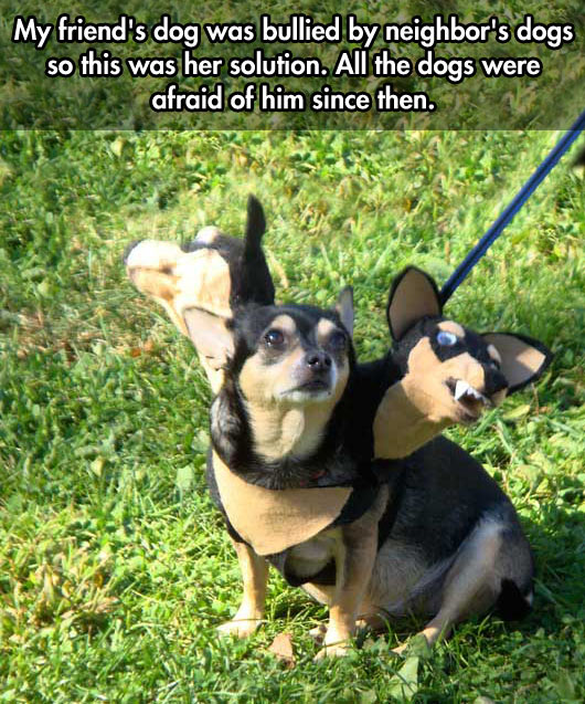 funny-picture-dog-bullied-costume-solution-three-heads