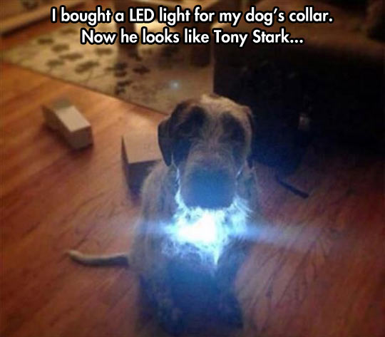 funny-picture-dog-collar-LED-light