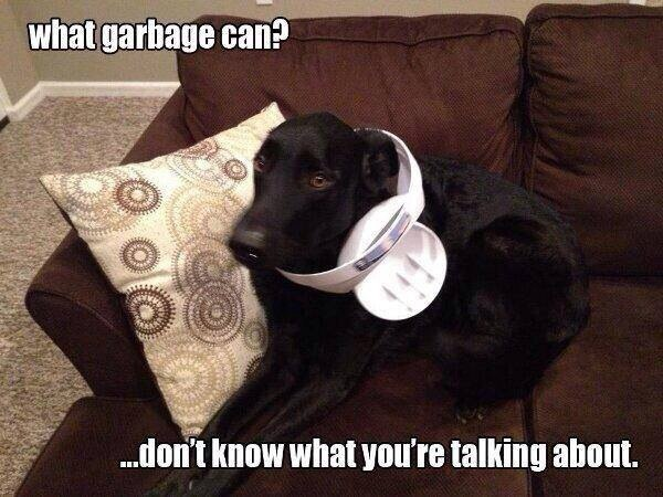 funny-picture-dog-garbage-can-stuck.jpg