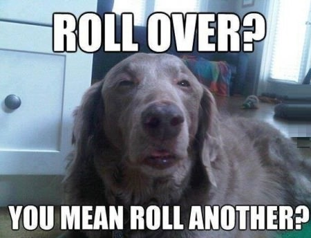 funny-picture-dog-roll-over