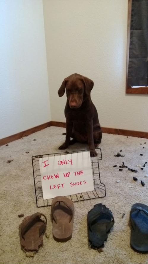 funny-picture-dog-shaming-left-shoes
