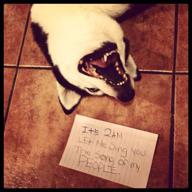 funny-picture-dog-shaming-song-night