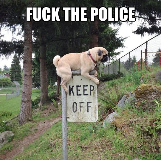 funny-picture-dog-sign-park-keep-off-anarchy