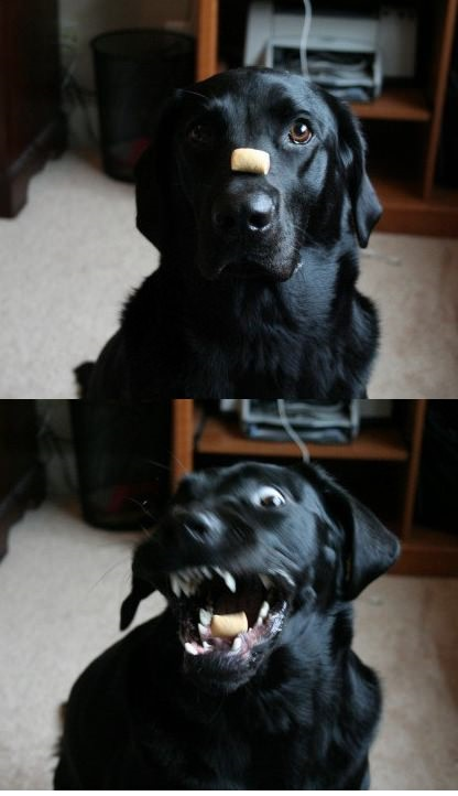 funny-picture-dog-snack