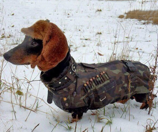 funny-picture-dog-war-clothes-bullet-hat-snow