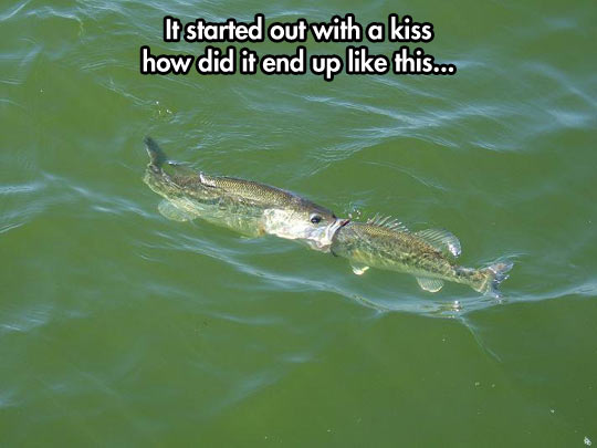 funny-picture-fish-kissing-mouth-river