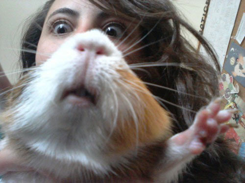 funny-picture-girl-hamster-face-eyes