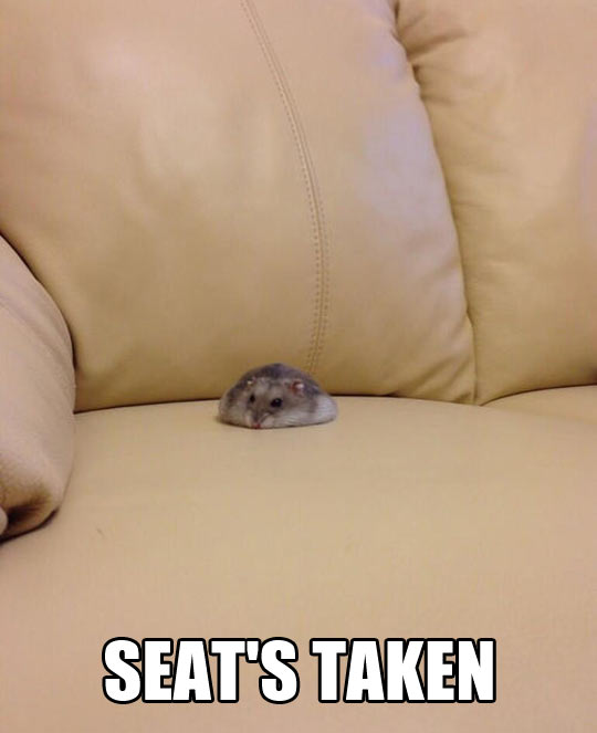 funny-picture-hamster-sitting-sofa