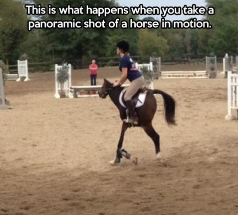 funny-picture-horse-panorama
