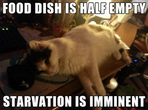 funny-picture-hungry-cat