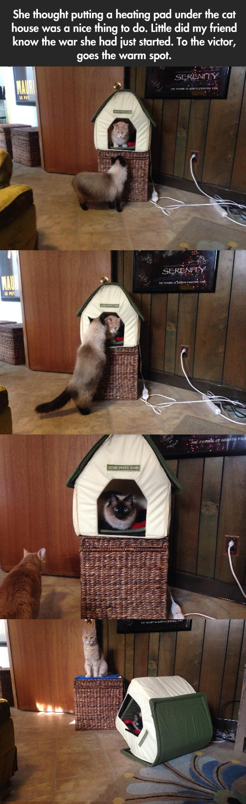funny-picture-kitty-kitten-cat-king-house