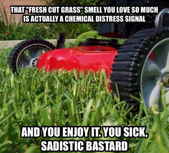 funny-picture-lawn-mower-grass-smell