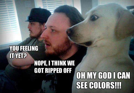 funny-picture-men-dog-tripping-colors