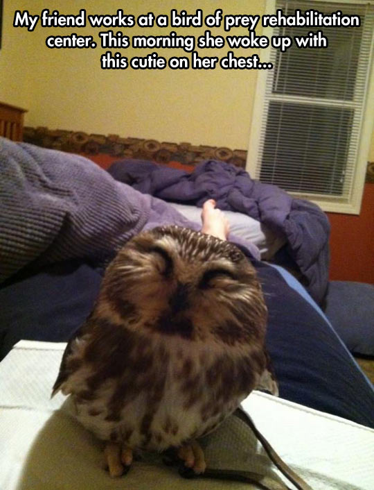 funny-picture-owl-happy-rehabilitation-center-morning