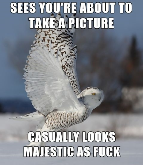 funny-picture-owl-posing