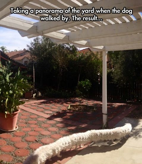 funny-picture-panorama-dog