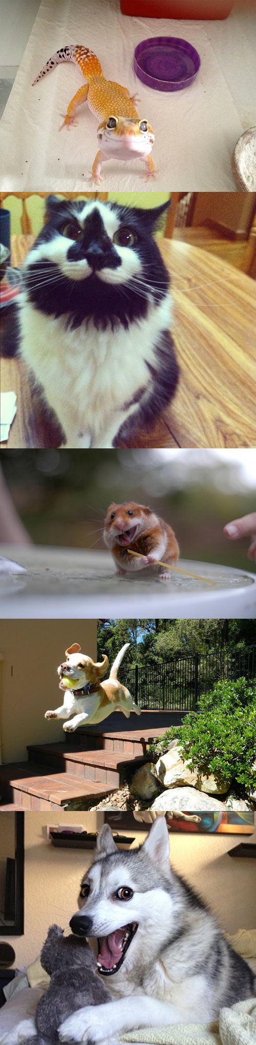 funny-picture-pet-animals-smiling-cat-dog-happiest