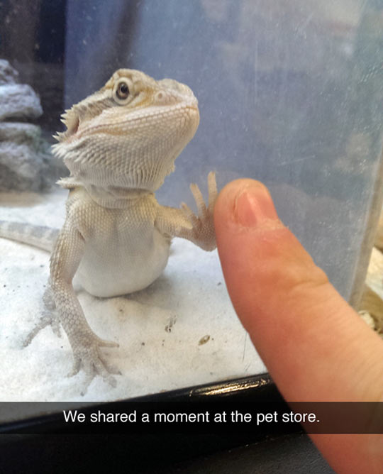 funny-picture-pet-store-lizard-finger
