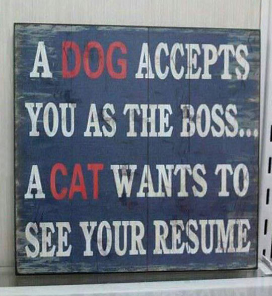 funny-picture-quote-dog-cat-boss