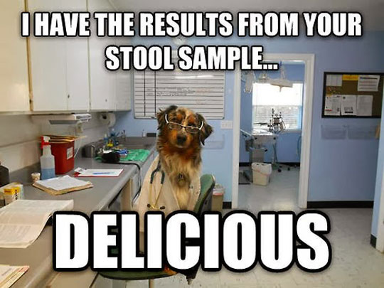 funny-picture-scientist-dog-stool-sample-lab