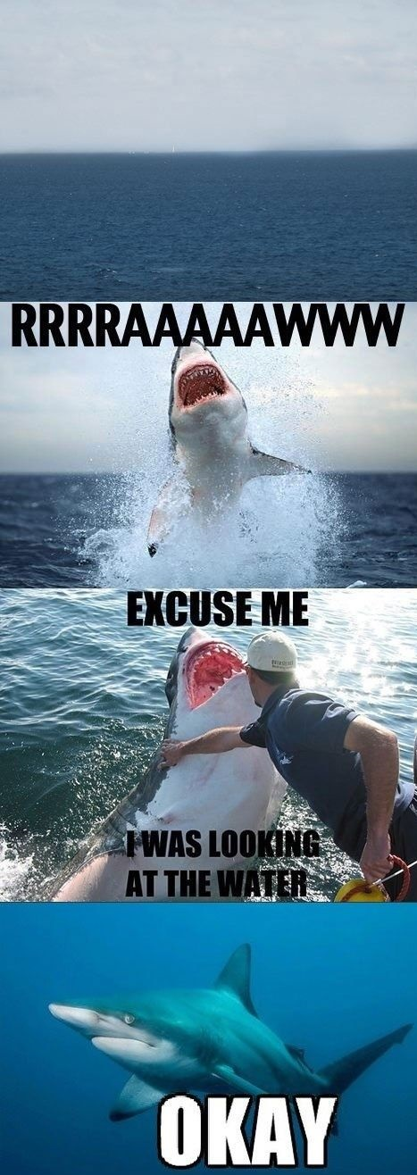 funny-picture-shark-rude
