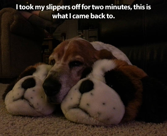 funny-picture-slippers-dog-sleeping-shape