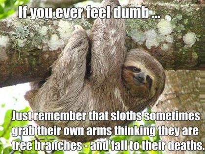 funny-picture-sloth-dumb