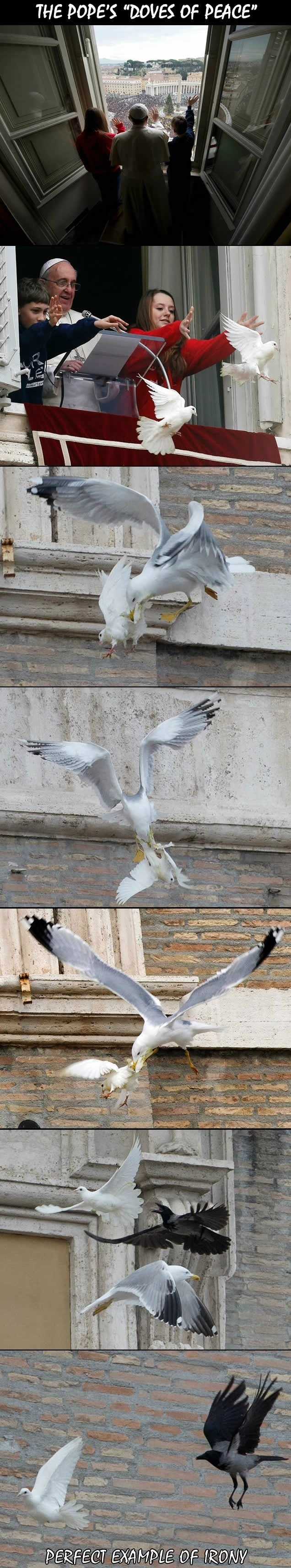 funny-picture-vatican-pigeons-irony