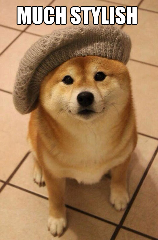 funny-picture-Doge-hat-style-clothe-dog