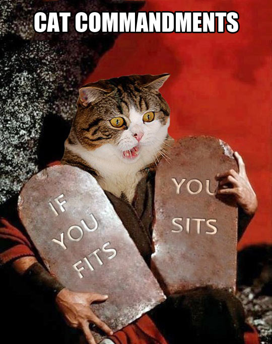 funny-picture-Moses-cat-commandment-stone