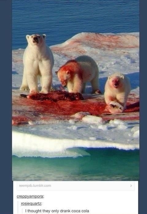 funny-picture-bears-blood-coca-cola