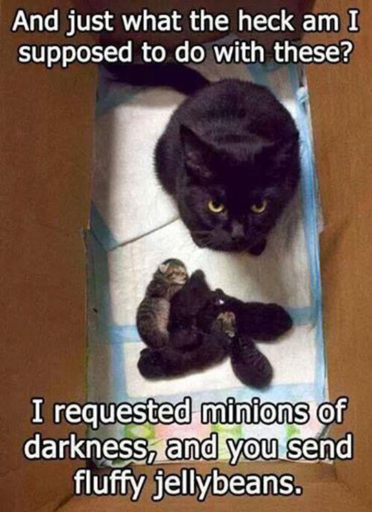 funny-picture-black-cat-fluffy-minions-darkness