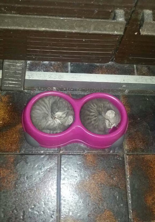 funny-picture-bowl-kittens-sleeping-food
