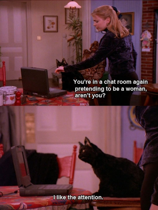 funny-picture-cat-attention-chat-room-Sabrina