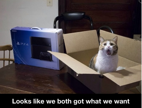 funny-picture-cat-box-ps4