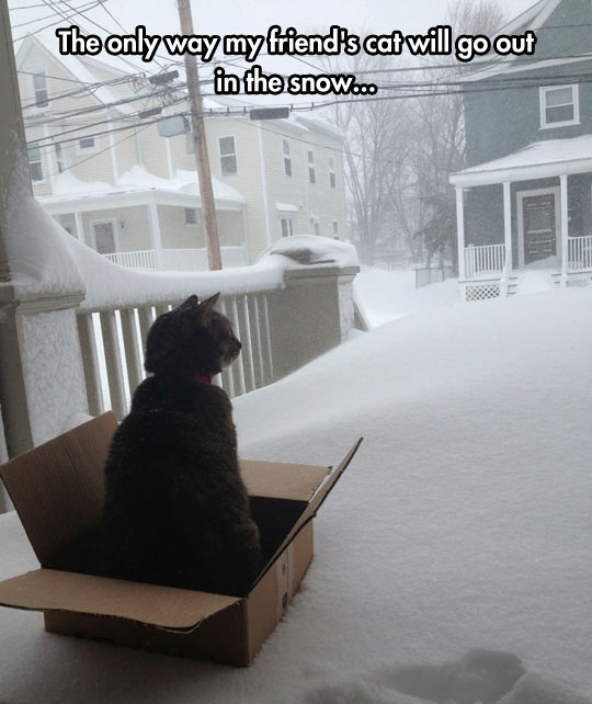funny-picture-cat-box-sled-snow
