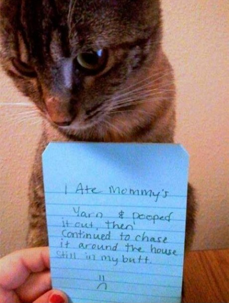 funny-picture-cat-shaming-note