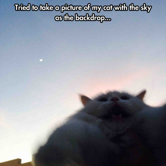 funny-picture-cat-sky-yelling-scarified