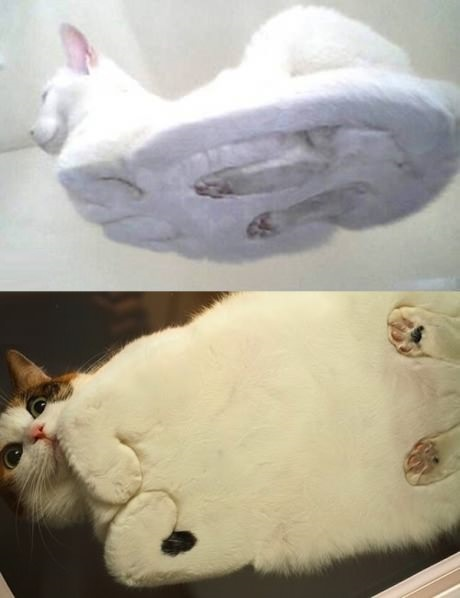 funny-picture-cats-sitting