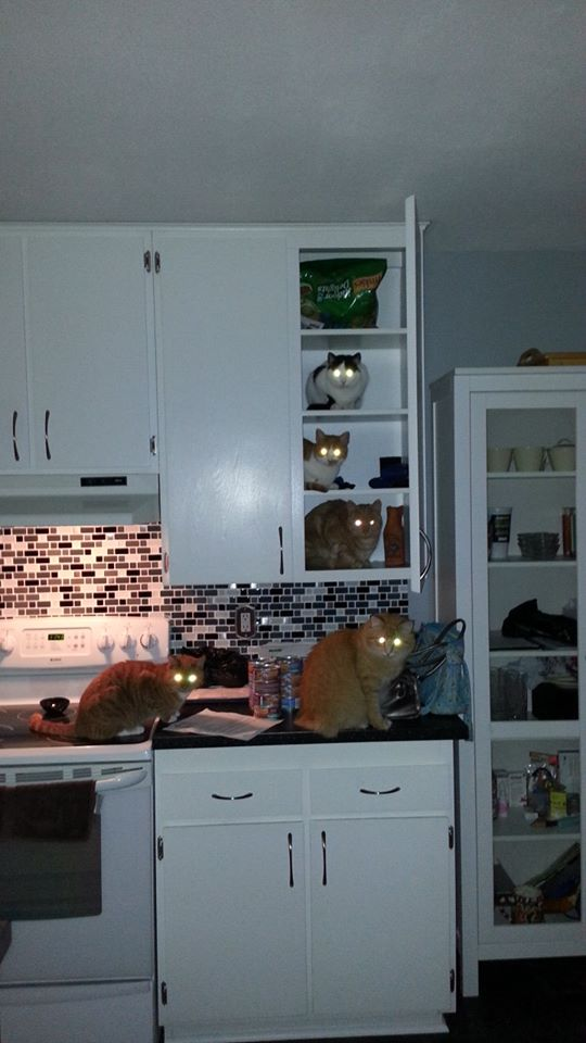 funny-picture-creepy-cats-kitchen